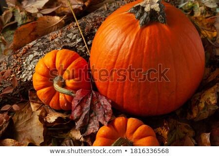 Pumpkin Themed Image Stock photo © damonshuck