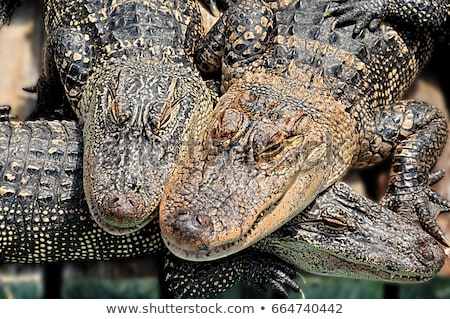 threesome of photographer stock photo © wjarek