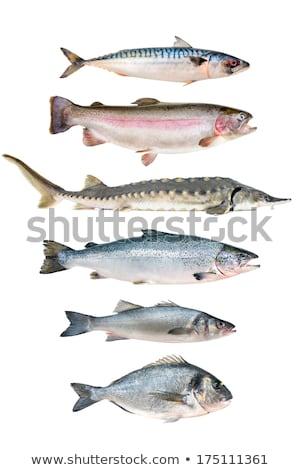 fresh sterlet fish on white background stock photo © bsani