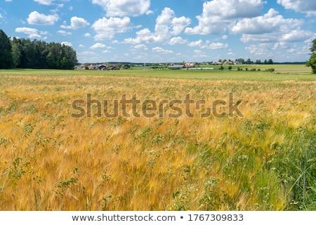 Graan veld Duitsland boom voorjaar gras Stockfoto © haraldmuc