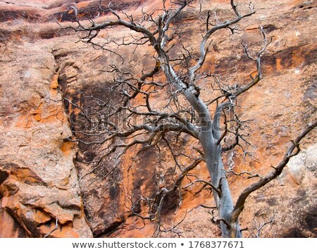 Red rocks and dead wood Stock photo © vwalakte
