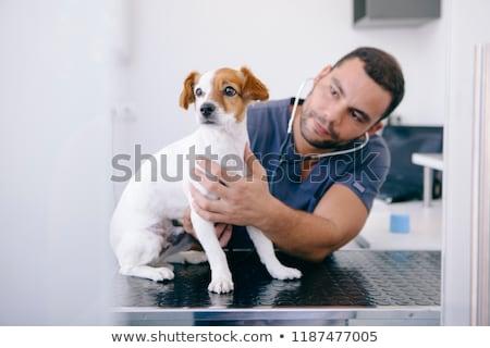Preocupado veterinário cão estetoscópio branco cachorro Foto stock © wavebreak_media