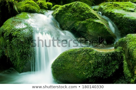 Yeşil manzara su düşen yeni bitki Stok fotoğraf © zzve