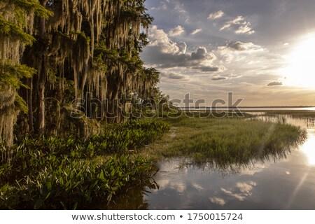 Himmel Fluss Holz Landschaft Wasser Wald Stock foto © taden