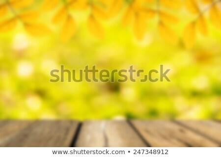 ストックフォト: 春 · 緑色の葉 · ぼけ味 · 日光 · 木材 · 空