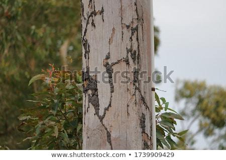 Termite and light pole Stock photo © sweetcrisis