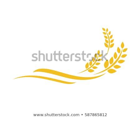 kenyér · búza · fülek · izolált · fehér · kenyér · fehér - stock fotó © oleksandro