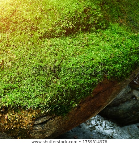 Ground level in a mossy forest Stock photo © olandsfokus