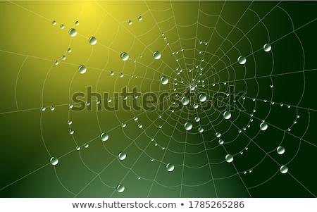 Spinneweb dauw bos water abstract blad Stockfoto © Fesus