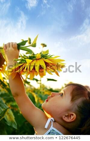 belo · criança · girassol · primavera · campo · flor - foto stock © zurijeta