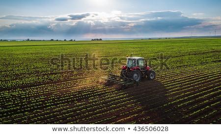 çiftçi alan pulluk kadın tarım vektör Stok fotoğraf © RAStudio