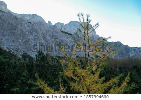 Manhã cores montanha alcance paisagem Foto stock © Taiga