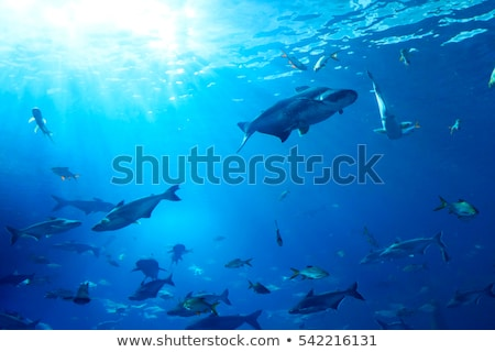 Grupo subacuático ilustración luz verde Foto stock © bluering