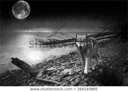 волка · лунный · свет · иллюстрация · собака · луна · синий - Сток-фото © adrenalina