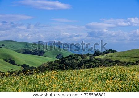 Musztarda trawiasty wzgórza parku California Zdjęcia stock © yhelfman