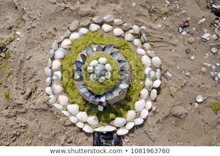 Shell escultura playa agua naturaleza paisaje Foto stock © chris2766