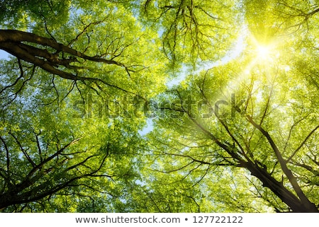 Fresh spring green tree leaves canopy in a forest.. Stock photo © latent