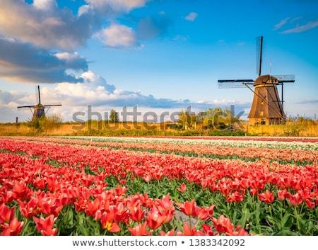 moinho · de · vento · holandês · Holanda · famoso · histórico · água - foto stock © janpietruszka