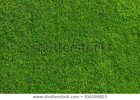 lawn texture Stock photo © FOKA