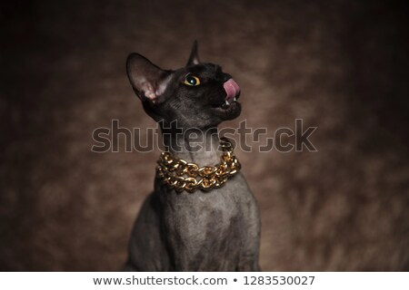 close up of eager cat looking up to side Stock photo © feedough