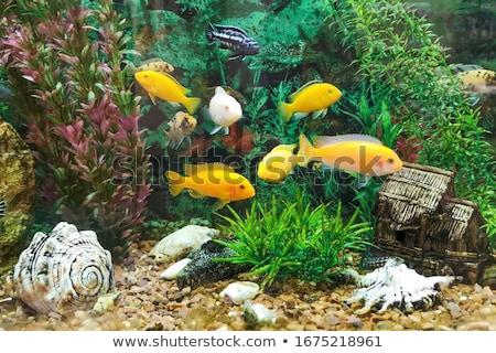 aquaristics fish and seaweed tropical animals stock photo © robuart