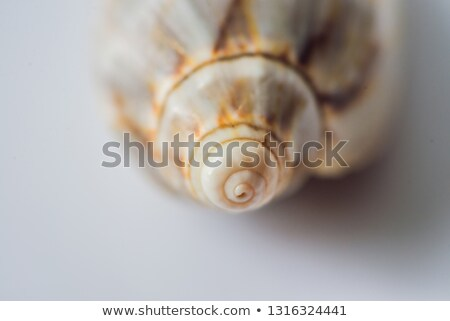 spiraal · shell · zandstrand · zee · panoramisch - stockfoto © galitskaya