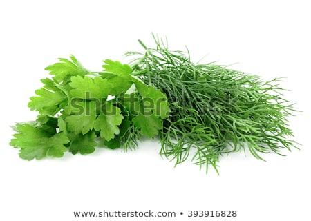 Perejil hierba superficial hoja Foto stock © AGfoto