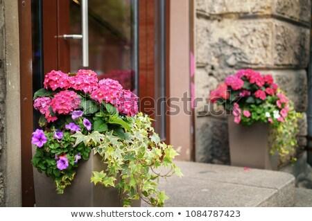 зеленый растений цветок крыльцо древесины домой Сток-фото © nomadsoul1