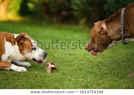 agression Stock photo © pterwort