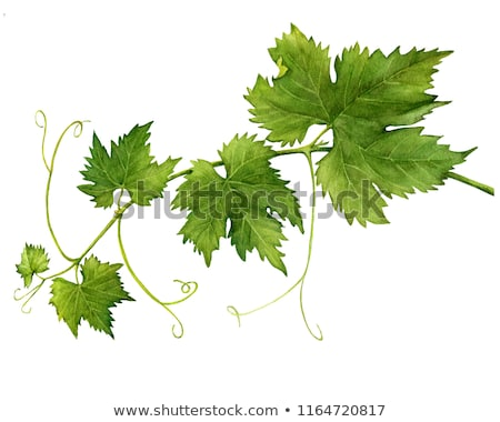 white wine and grape leaves. Stock photo © justinb