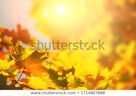 Orange Fall