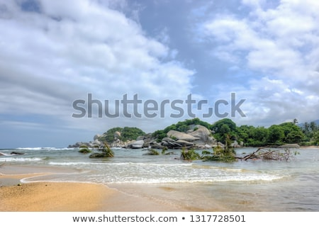 Fallen palm tree on a sand of the tropical beach Stock photo © moses