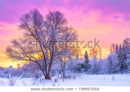 Beautiful sunset in winter park Stock photo © michey