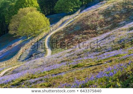 rural footpath Stock photo © Hofmeester