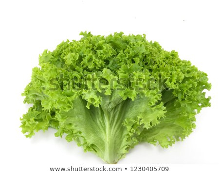 Fresh coral lettuce  Stock photo © yuliang11