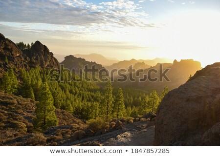 Stockfoto: Boom · silhouet · berg · hemel · natuur · bomen