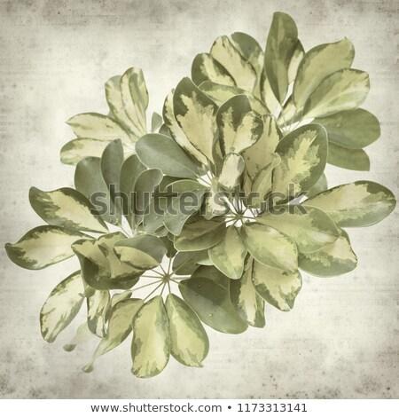 grunge · virág · pillangó · festék · alkotóelem · terv - stock fotó © wad