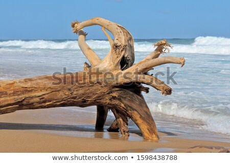 Huge Driftwood Stump in the water Stock photo © mybaitshop