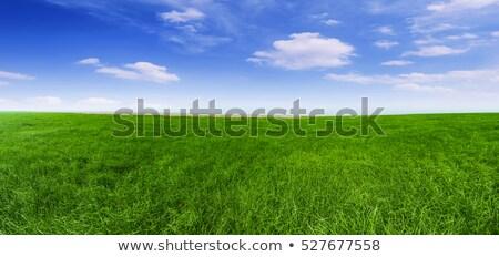 Herbeux domaine ciel bleu image paysage printemps Photo stock © matwatkins