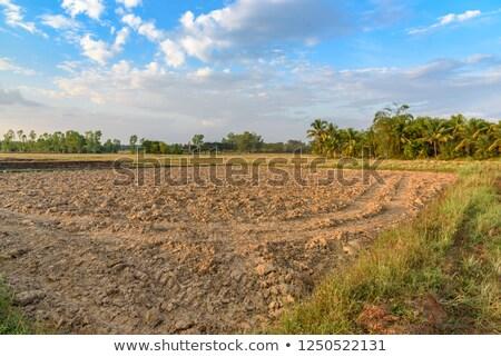 Arable earth Stock photo © dvarg