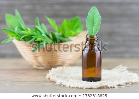 Foto stock: Sálvia · tabela · água · madeira