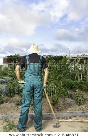 Agricultor hombre azada mirando campo Foto stock © lunamarina