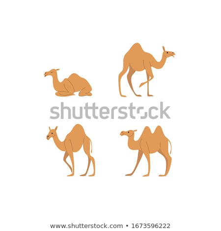 camel in Sitting pose Stock photo © Istanbul2009