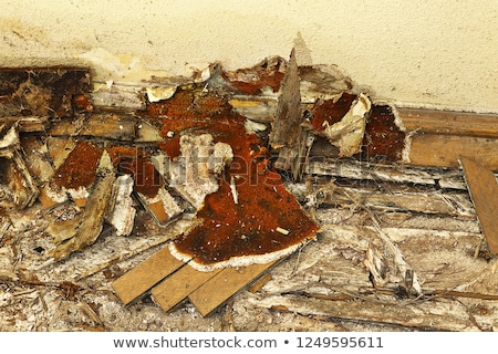 dry rot on old wall Stock photo © taviphoto