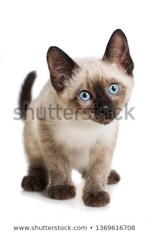 мало котенка играет игрушку мяча изолированный Сток-фото © ivonnewierink