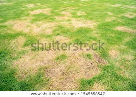 Dry leaves on a lawn Stock photo © Fotografiche