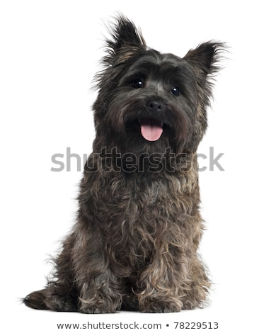 Puppy terriër portret studio gelukkig zwarte Stockfoto © vauvau