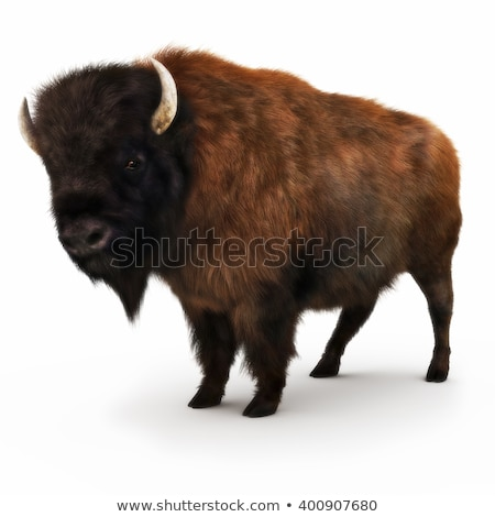 Brown buffalo on white background Stock photo © bluering