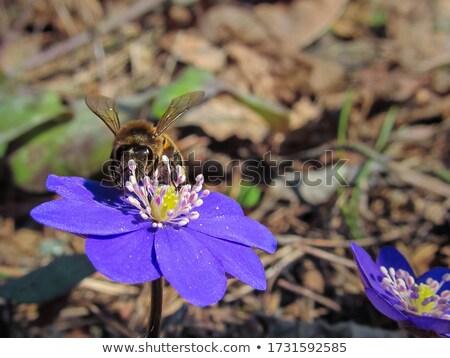 Insecten bos glade kleurboek bloemen ontwerp Stockfoto © Olena
