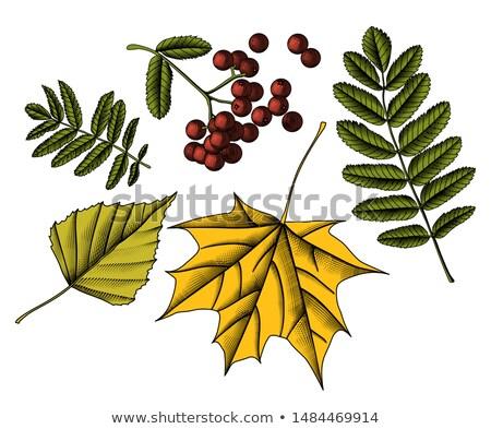 botanique · symboles · neuf · vecteur · eps8 - photo stock © lady-luck